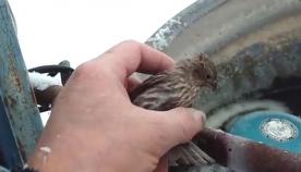 მამაკაცმა რკინაზე მიყინული ბეღურა დაიხსნა (+ვიდეო)