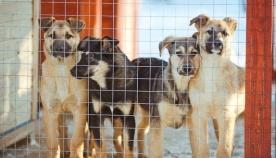 რეგიონებში ცხოველთა თავშესაფრების მშენებლობა იწყება
