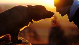 ძაღლებს ადამიანების მსგავსი ეპიზოდური მეხსიერება აქვთ