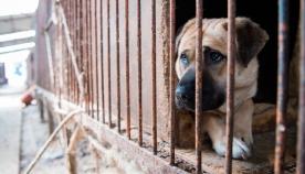 სამხრეთ კორეაში, შესაძლოა, საკვებად გამოყენების მიზნით  ფერმაში ძაღლების გამრავლება სრულიად აიკრძალოს