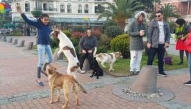 რატომ მიიყვანეს ბათუმში აქციაზე ძაღლები?