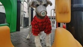 ჩინეთში მცხოვრები ძაღლის პატრონები, თავიანთი შინაური ცხოველებისთვის, კორონოვირუსისგან დასაცავად, ნიღბებს ყიდულობენ