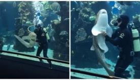 მოფერება ზვიგენსაც უყვარს (სახალისო ვიდეო)