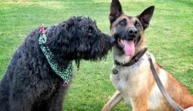 საინტერესო და უცნაური ფაქტები ძაღლების შესახებ