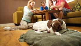 ძაღლის დასვენება სახლის პირობებში