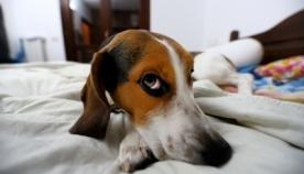 ტესტი: როგორი მახსოვრობა აქვს თქვენს ძაღლს?