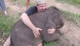 პატარა სპილო ჩახუტებაზე გიჟდება (სახალისო ვიდეო)
