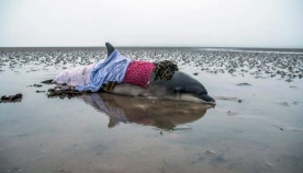 ნავიგატორების შეცდომამ დელფინი გადაარჩინა