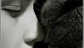 გოგონამ თავის დაღუპულ კატას წერილი მისწერა…