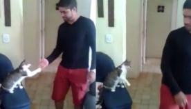 """კატა - """"კაცური კაცი""""  (+ვიდეო)"""