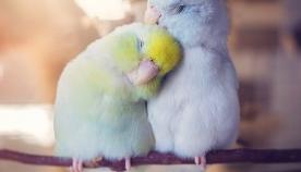 """თუთიყუშების """"სიყვარულის ფოტოისტორია"""" გულს ათბობს! (+ფოტო)"""