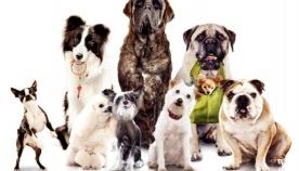 რით განსხვავდებიან ძაღლები?!