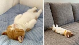 კნუტი, რომელსაც ძალიან უყვარს ადამიანივთი ზურგზე ძილი (სახალისო ფოტოები)