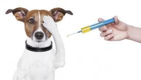ძაღლის ვირუსული დაავადებები (ენტერიტი, ჭირი, ჰეპატიტი, ცოფი)