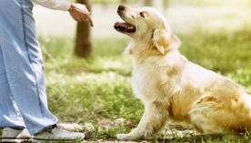 როგორ ვასწავლოთ ძაღლს ბრძანება