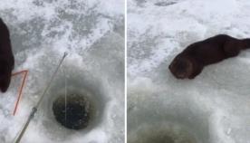 მეთევზე მშიერ წავს თევზით გაუმასპინძლდა (+ვიდეო)