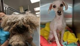 ძაღლი 2 წელი საწოლის ქვეშ ცხოვრობდა...მისი ამბავი