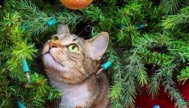 რომელი მცენარეებია საშიში ძაღლებისთვის და კატებისთვის?