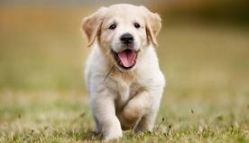 ძაღლის 15 გავრცელებული სახელი