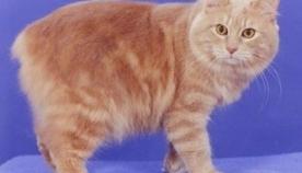 კიმრული კატა