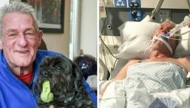 ძაღლი-თერაპევტი: შინაურმა ცხოველმა პატრონი კომიდან გამოიყვანა და კლინიკებში თერაპევტად მუშაობა დაიწყო