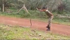 სამხედრომ მეგობრებს აჩვენა, თუ როგორ უნდა დაიჭირო კობრა უსაფრთხოდ და მშვიდად (უჩვეულო ვიდეო)