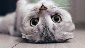 რატომ აკეთებს კატა ამას? დროა, გავიგოთ მათი მთავარი საიდუმლო