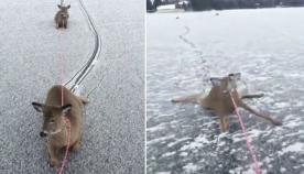 მამაკაცმა ყინულით დაფარული მდინარიდან 3 შველი გადაარჩინა (ემოციური ვიდეო)