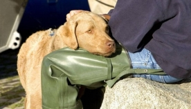 """""""ძაღლს შესაძლოა, იგივე დაავადება სჭირდეს, რაც ადამიანს..."""" - 8 ფაქტი ძაღლების შესახებ, რომლებიც შესაძლოა, არ იცოდით"""