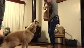 ძაღლის რეაქცია, რომელმაც დაბადების დღეზე საუკეთესო საჩუქარი მიიღო (სახალისო ვიდეო)