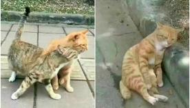 ხვადმა კატამ დაინახა, რომ შეყვარებული ღალატობს, მისმა რეაქციამ ყველა გააკვირვა...