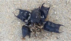 ჩრდილოეთ კაროლინას სანაპიროზე ჩნდება ჩანთები, რომლის შექმნაშიც ადამიანის ხელი არ ურევია (+ვიდეო)