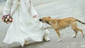 ქორწილში არავინ იცოდა, რას მალავდა ის კაბის ქვეშ.. მაგრამ ძაღლი მაშინვე მიხვდა, რომ რაღაც ცუდი ხდებოდა…