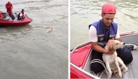 ცხოველთა მონიტორინგის სააგენტოს მაშველებმა მტკვარში ჩავარდნილი უპატრონო ძაღლი გადაარჩინეს