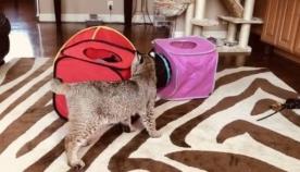 დიასახლისმა ქუჩიდან უცნაური კატა აიყვანა: