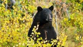 ტყეში ორი დღით  დაკარგული 3 წლის ბავშვი ამბობს, რომ დათვმა გადაარჩინა
