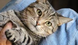7 ფაქტი - როგორ ექცევით თქვენს კატას, რის გამოც ის მალულად ვერ გიტანთ