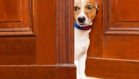 11 ფაქტი: რა არ მოსწონთ ძაღლებს ადამიანებისგან?
