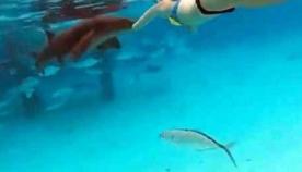 მამაკაცმა ცოლზე ზვიგენის თავდასხმა გადაიღო (+ვიდეო)