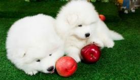 ადამიანისთვის განკუთვნილი  საკვები, რომელიც შეგიძლიათ, თქვენს ძაღლსაც უწილადოთ
