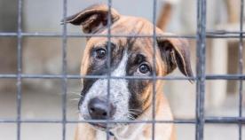 ცხოველებისადმი არასათანადო მოპყრობისთვის გათვალისწინებული სასჯელის ზომები მკაცრდება