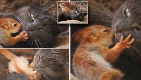 კატამ ობლად დარჩენილი 4 ციყვის ნაშიერი იშვილა
