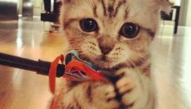 თამაში კატებთან და მათი საყვარელი სათამაშოები