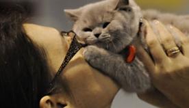 შეუძლია თუ არა კატას სიყვარული?