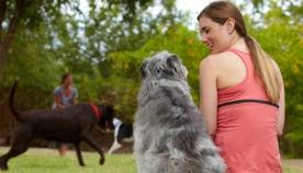 ძაღლისა და ადამიანის მშვიდობიანი თანაცხოვრება