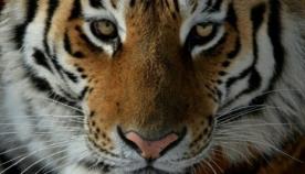 10 იშვიათი ცხოველი, რომლებიც ხშირად ხდებიან კონტრაბანდისტების მსხვერპლნი