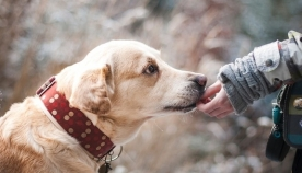 რას შეიგრძნობენ ძაღლები ნივთის ყნოსვის დროს და როგორ პოულობენ დაკარგულ ადამიანებს?