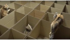 """როგორ გამოიყურება """"კატების სამოთხე"""" (სახალისო ვიდეო)"""