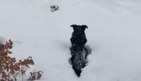 ძაღლმა თოვლში ჩარჩენილი მეგობარი სამშვიდობოს გამოიყვანა (+ვიდეო)