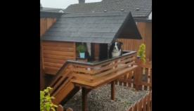 ძაღლებისთვის განკუთვნილი საოცრად კომფორტული სახლი, რომელსაც ფანჯრები და აივანი აქვს (+ვიდეო)